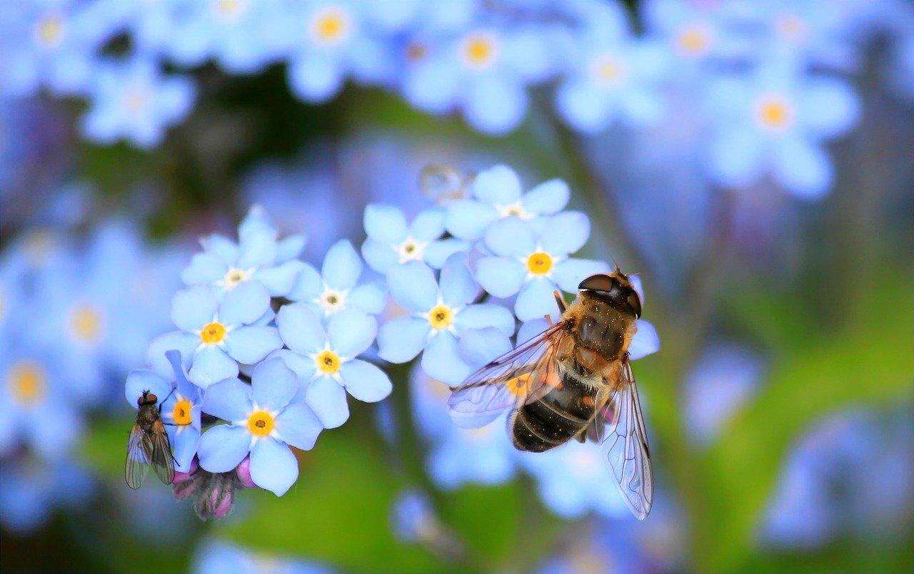 fleurs pour attirer les abeilles