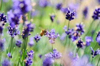 comment rendre-votre-jardin-accueillant-pour-les-abeilles